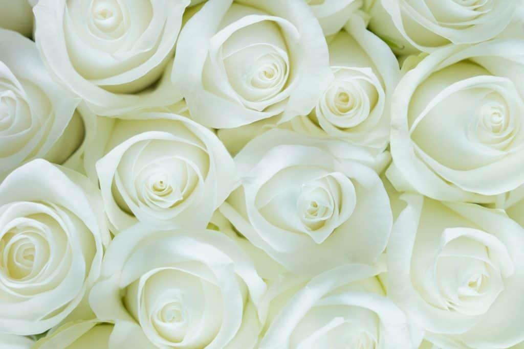 Terug aan de natuur, persoonlijk ritueel, nieuw ritueel, ritueelbegeleiding, rozen, Simone Snakenborg Ritueelbegeleiding Tilburg