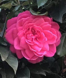 liefde is, gedicht, Simone Snakenborg Ritueelbegeleiding, uitvaarten Tilburg, afscheidsdienst