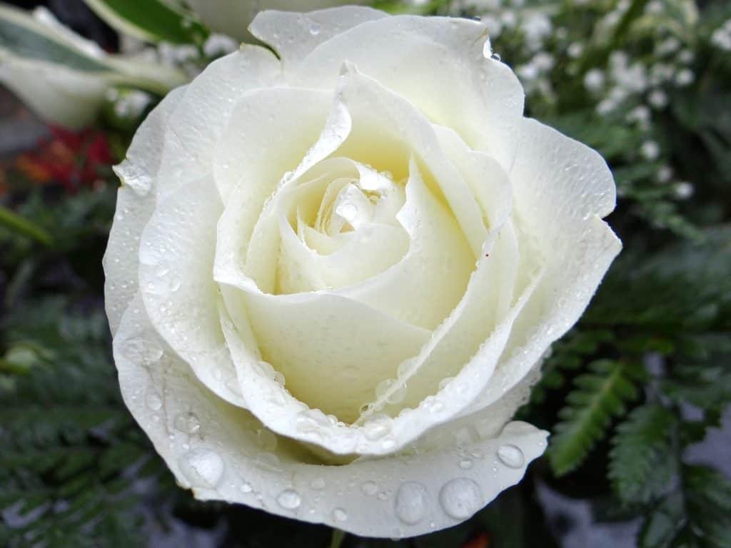 liefde is als adem, rouwgedicht, Simone Snakenborg Ritueelbegeleiding, uitvaarten Tilburg, afscheidsdienst