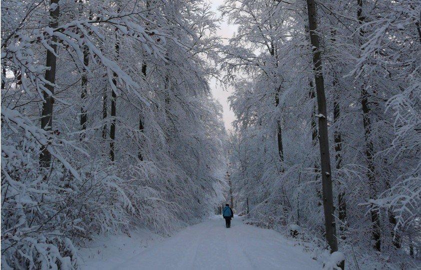 Vier Seizoenen Wandeling, Winterwandeling, 20 januari 2019, Harriet van der Vleuten Uitvaartbegeleiding, Simone Snakenborg Ritueelbegeleiding, Anneke Naaijkens-Doek, hans van Zon